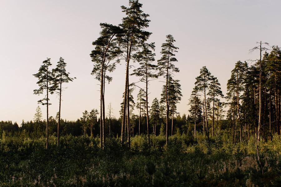 latvija mezs saulriets