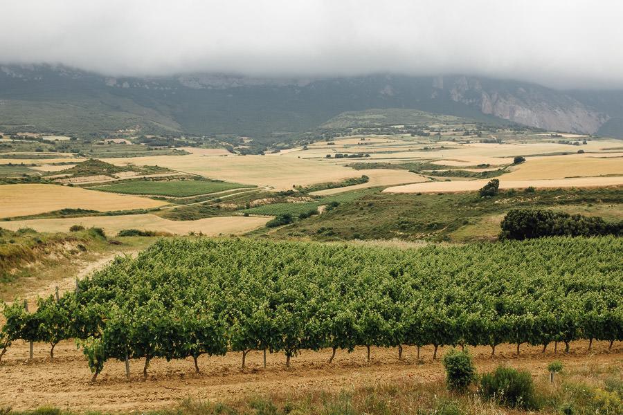 spain wineyard