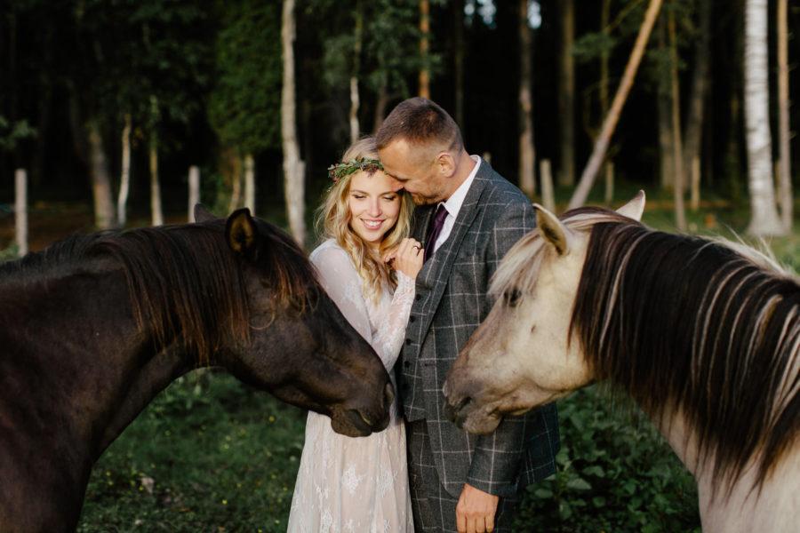 savvaļas zirgi kāzas