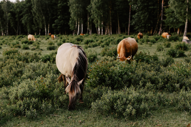 savvalas zirgi