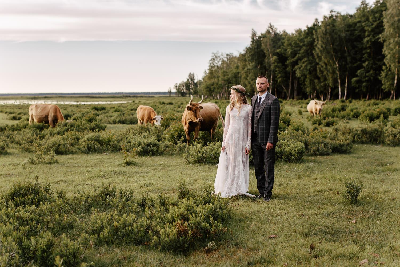 savvalas govis engures ezera