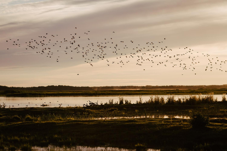 putnu migracija